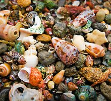 Shells,Great Ocean Road,Australia. by Darryl Fowler