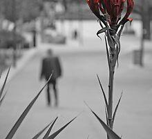 Flax by ozecard
