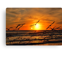 Seagulls at Sunset Canvas Print
