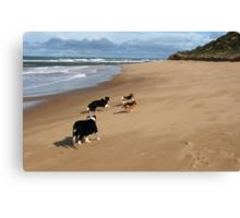 Borders & Beagles run free - Point Lonsdale  Victoria Canvas Print