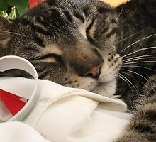 Cookies and Cats by Teresa Williams