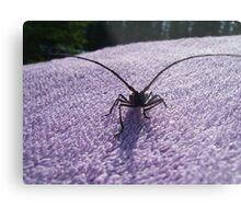 Creepy Bug Metal Print