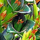 Puya alpestris by Sally Winter
