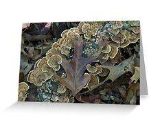 Fabulous Fall Fungus Greeting Card