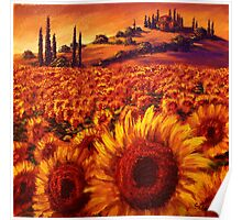 Wandering the Tuscan Sunflowers Poster