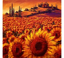 Wandering the Tuscan Sunflowers Photographic Print
