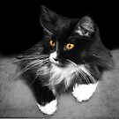 Mittens Portrait II by digitalmidge