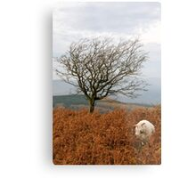 Sheep and a tree Metal Print
