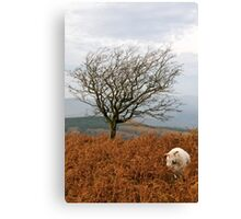 Sheep and a tree Canvas Print