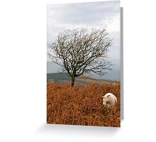 Sheep and a tree Greeting Card