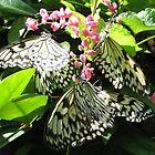 Butterflies by atkinnt