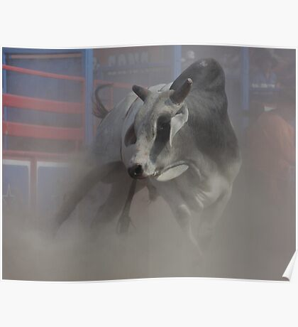 Stressed bull Poster