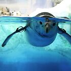 :: Penguin at Nagoya Aquarium :: by Only K Photography