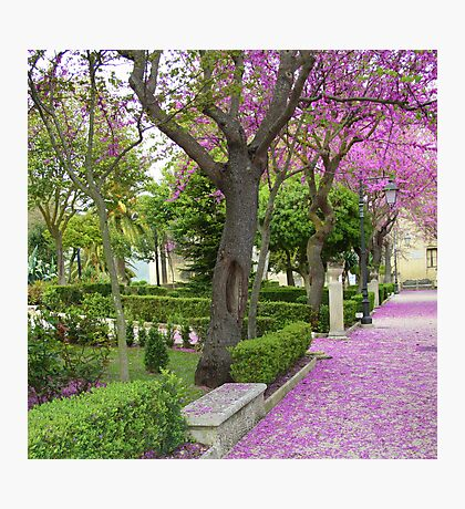 Ragusa in the spring time Photographic Print