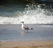 seagull by rondinara