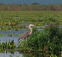 Precious Moments with Heron by Pamela Phelps