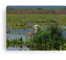 Precious Moments with Heron Canvas Print