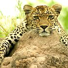relaxed and looking - Karula by Pieter  Pretorius