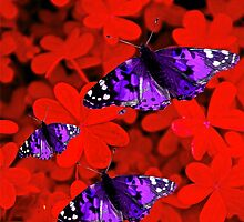 Butterflies Are Free To Fly #2 by Saundra Myles