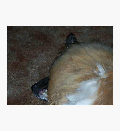 Sleeping T-Bone Photographic Print