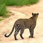 paths, places and perception - Karula by Pieter  Pretorius