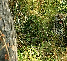 listen!  rustle and snarl - Karula by Pieter  Pretorius