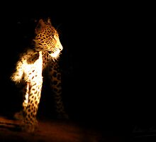 in the night light - Karula by Pieter  Pretorius