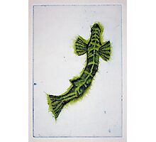Fish Study - Etching Photographic Print