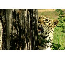 scent and sight - Karula Photographic Print