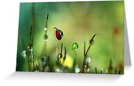 Moss II by Sharon Johnstone