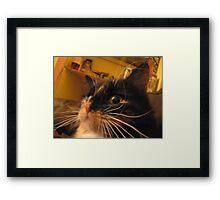 Whisker Disaster Framed Print