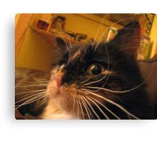 Whisker Disaster Canvas Print
