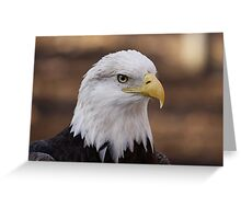 Bald Eagle Portrait Greeting Card
