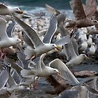 Gull Power by Martin Smart