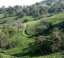 Bush track among the hills at Ben Loman. NSW. Australia by Marilyn Baldey
