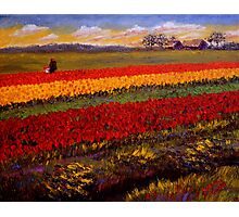 Evening Tulip Picking Photographic Print