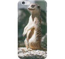 lemur at the zoo iPhone Case/Skin