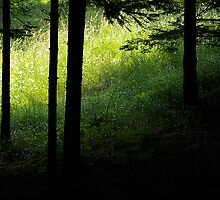 Forest Meadow by rdshaw