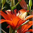 Fire Heart - Lillies by Shatatomyo