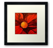 Red Cosmos Center Framed Print