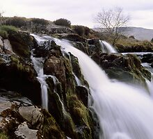 Loup o'Fintry, large format by PigleT