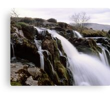 Loup o'Fintry, large format Canvas Print