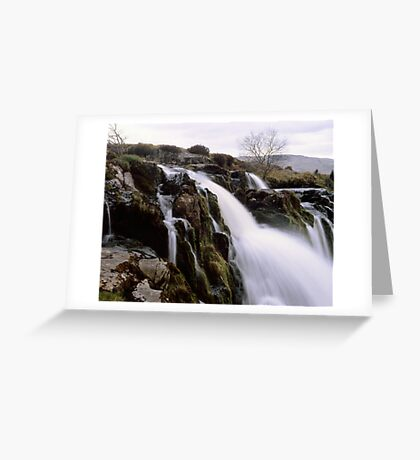 Loup o'Fintry, large format Greeting Card