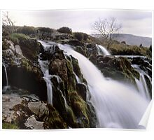 Loup o'Fintry, large format Poster