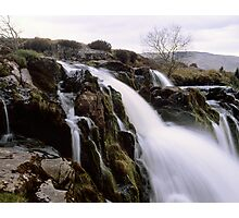 Loup o'Fintry, large format Photographic Print