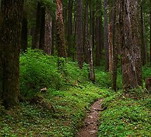 Forested Trail by rdshaw