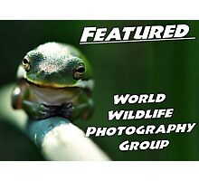 WWP Featured Photographic Print
