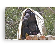 Hot Chimp Canvas Print