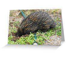 True Australian Garden Visitor  Greeting Card