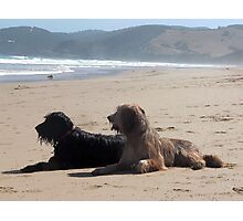 Briard Beach Bums #2 Photographic Print
